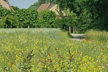 Vlaanderen wandelt lokaal zondag 27 juni 2021
